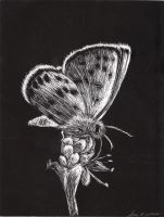 butterfly scratch board by TheSlaveQueen