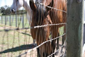 horse behind the fence 2 by thegeforce