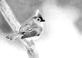 Tufted Titmouse by JustABeautifulDream