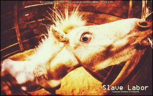 Slave Labor by RouxHP