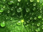 Leafy Droplets Wallpaper by richardxthripp