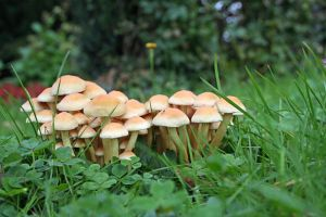 Mushrooms 21 by CD-STOCK