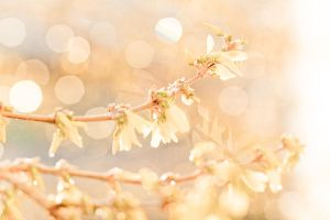 spring impressions by little--baby-nothing