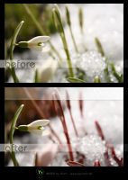 before - after: Spring by KiwisaftDEsign