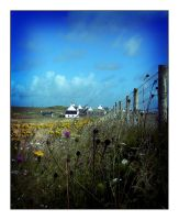 TIREE FIELDS AND FLOWERS 2 by rosebud10
