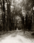 silent path by Toadsmoothy2