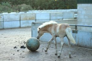 Let's play soccer by jochniew