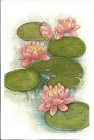 Water lilly by niinamok