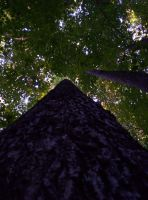 A New Perspective by Zsy