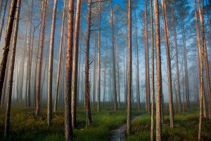 Underfog forest by puu4ux