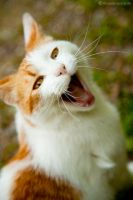 Laughing Cat_BL by Leox90