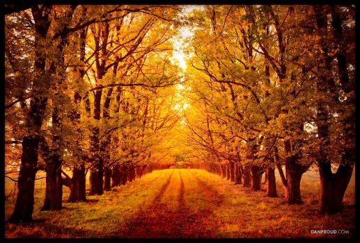Autumn Road by dannyp5000