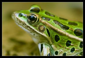frog by bsq2phat