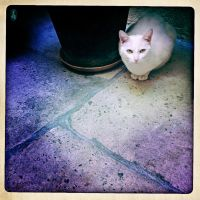 The black cat of the Concierge by LEQUARK