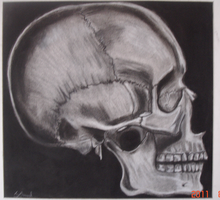 skull charcoal by Missa91