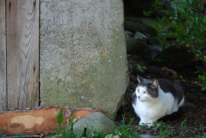 Farm Cat by TheHeartwoodStudio