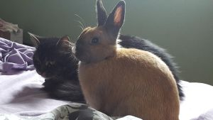 Cat/Rabbit Stock~ Koggy and Sorsha 2 by ChellytheBean