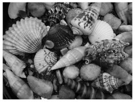 Shells in BW by I-Heart-Photos