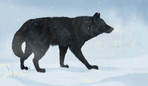 Brother Wolf by Paiden