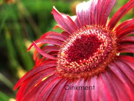 Redness by Oinkment
