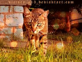 :.:Hunting:.: by victory-a13