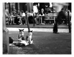 le chat alerte by claytes