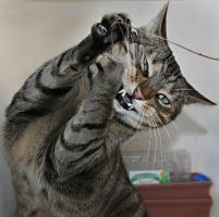 cat-karate by Drezdany-stocks
