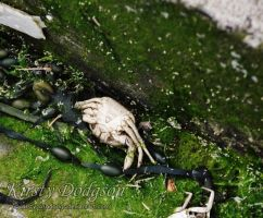 Was once a crab by Kirsty2010dodgs