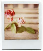 Still Life with Spray Roses and Salal by tiganusi