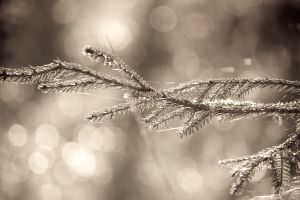 Bokeh by DaBanch