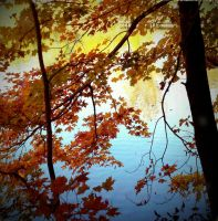 Fall in the Forest I by marisamudd