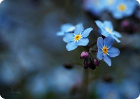 forget-me-nots1... by TheRedGirl