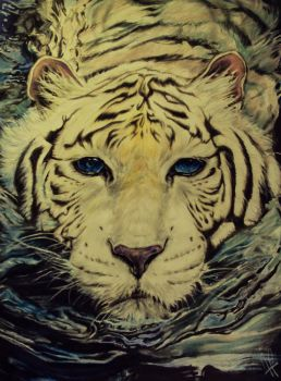 White tiger swimming in Water by Kentcharm