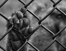 caged ape by Mjag