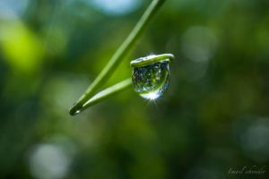 Raindrop Hanging On Tendril by isischneider