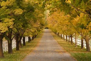 Lined with Trees: Autumn by greenwalled1