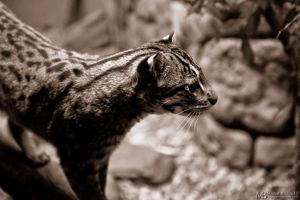 Fishing Cat 2 by Yupa