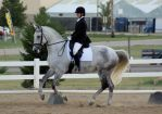 Grey Warmblood Mare by diamonte-stock