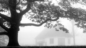 23.10.2011: Tree and House by Suensyan