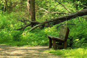 A resting spot in the middle of the Woods. by sweatangel