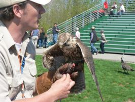 Hawk and trainer by allykat
