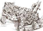 leopards by Repaul