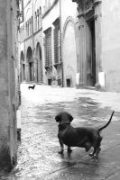 Dogs in Lucca by IceHand84