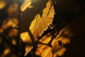 Autumnal Gold by Gwend-O-Ithilien