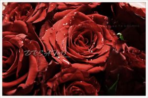 Red Roses by D-R-E-A-M-O