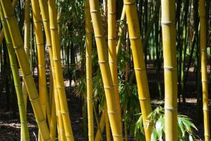 Bamboo Stock 2 by chamberstock