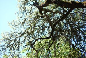 Branches by CompassLogicStock