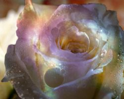 Space Rose by Catt22489