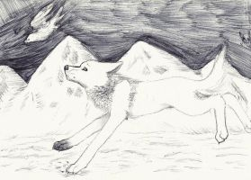 white wolf, white falcon by Polo333