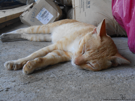 Country cat 20141025 _ 3 by K4nK4n